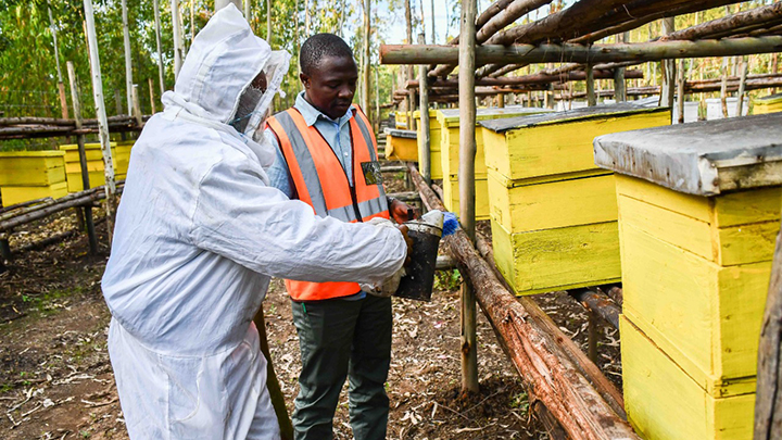 KTDA Forest Officer, George Oselu on a visit to the bee farms in Meru. PHOTO/KTDA